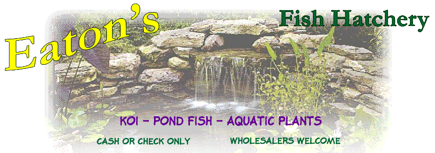 Eaton's Fish Hatchery - Koi, Goldfish, Water plants, Thurmont MD